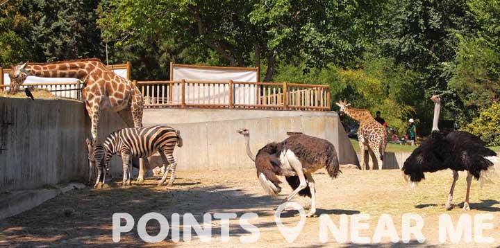 zoo near me