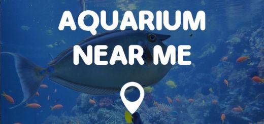 Aquarium shop near me house of fishery lovers for Fish tank supplies near me