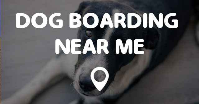 DOG BOARDING NEAR ME - Points Near Me