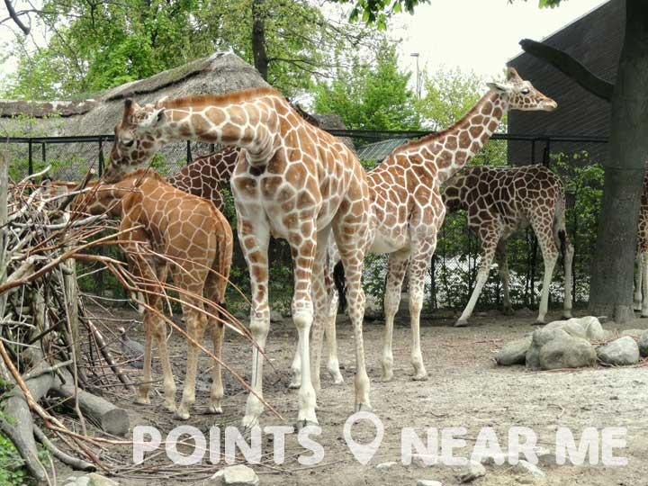 zoos near me