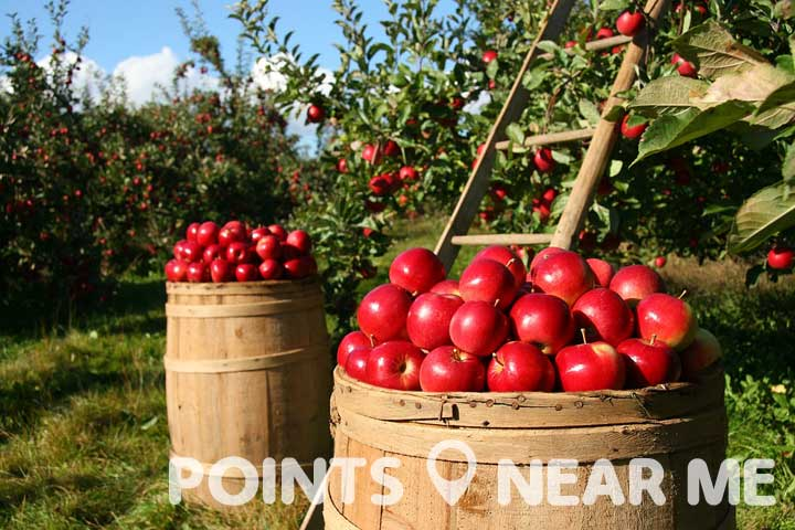 apple orchards near me