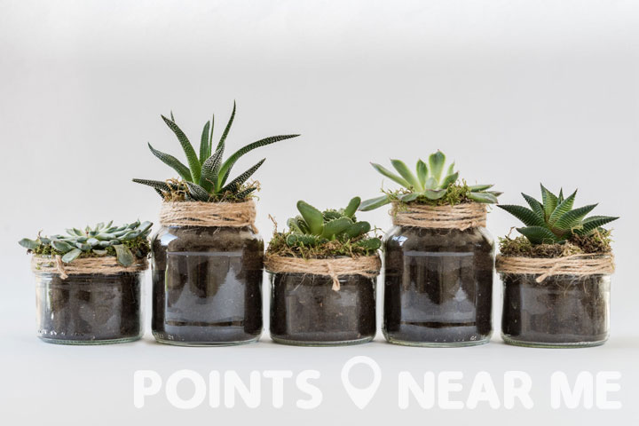 Artificial succulents look almost like the real thing!